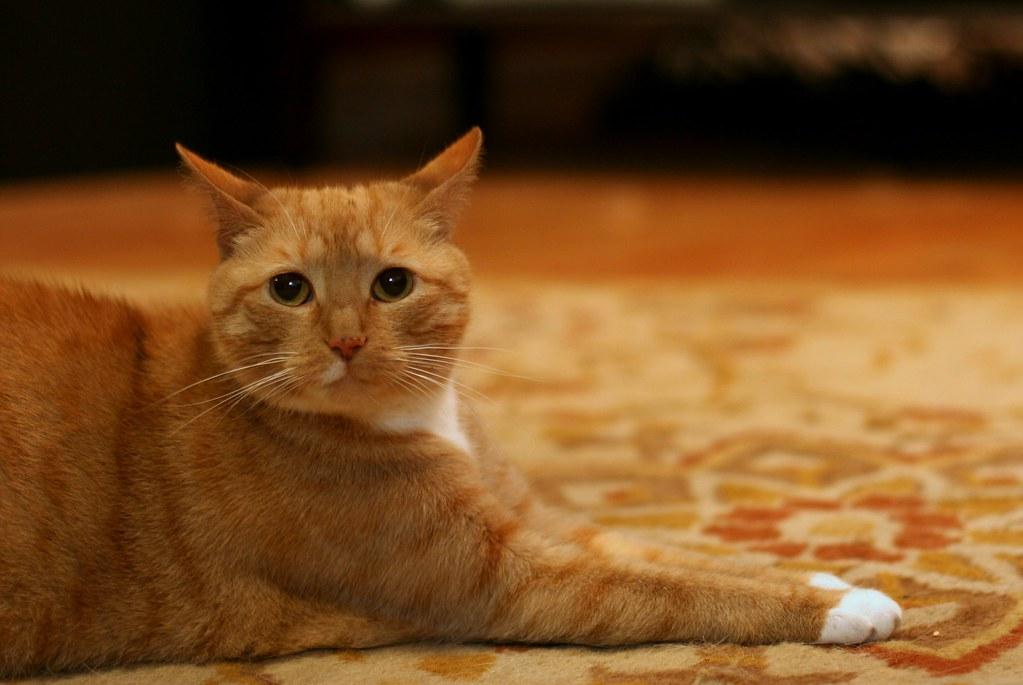 Sphinxy Cat