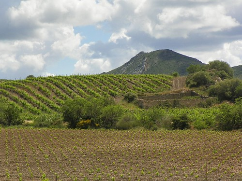 A Corbieres Vineyard