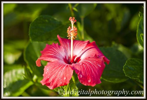 Flor roja...!