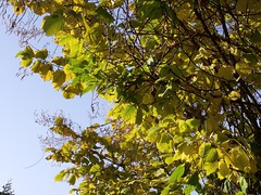 Herbst // Autumn