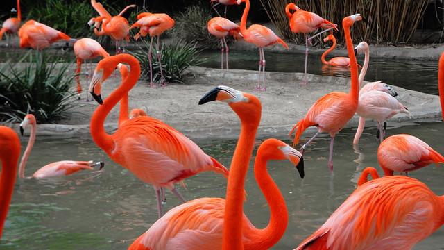 Flamingos 1, Sony DSC-W350