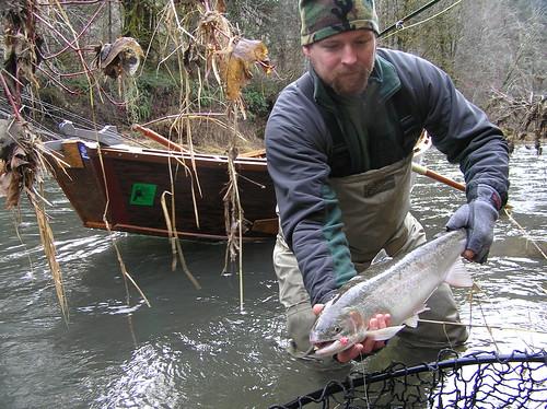 Alsea river steelhead report late december 2009 one for Alsea river fishing report