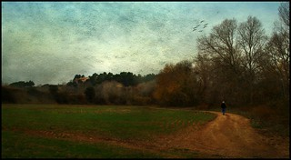 Passeig vora els sembrats // Stroll by the Fields