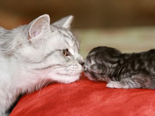 Châtaigne 4 mois & bébé Macaron 3 jours