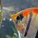 Heeere fishy, fishy... by BlueRidgeKitties
