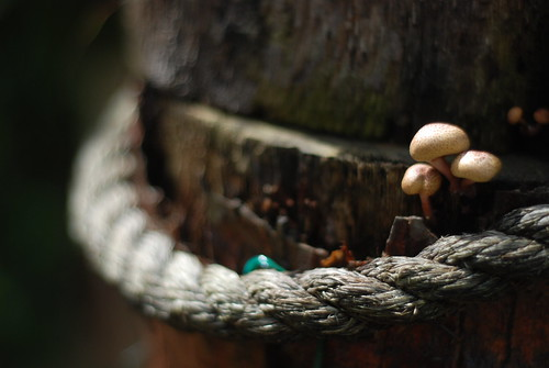 Life is too short to stuff a mushroom.