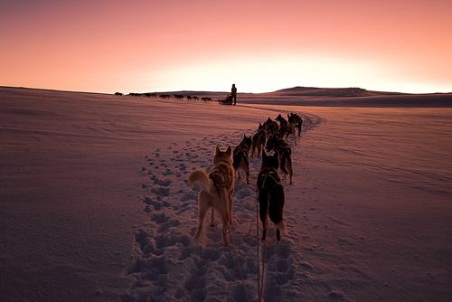 sunset dogs sunrise landscape husky huskies mushing sleddog finnmark sleddogs mørketid alaskanhusky vidda polarnacht darkseason