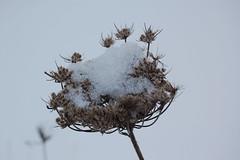 Schnee (Winter 2009/2010)