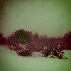 Vintage style photo of our snowy backyard today