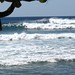 Small photo of Makaha