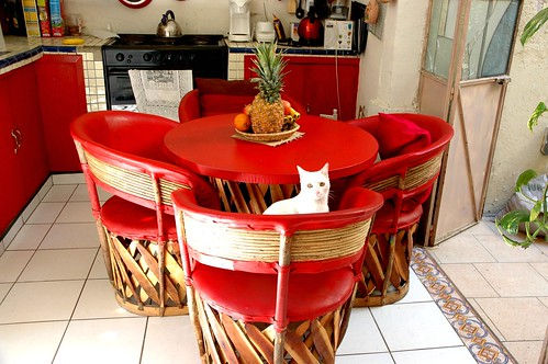 White elvish cat at the traditional Mexican leather kitchen table and chairs, in red, Guadalajara, Jalisco, Mexico by Wonderlane