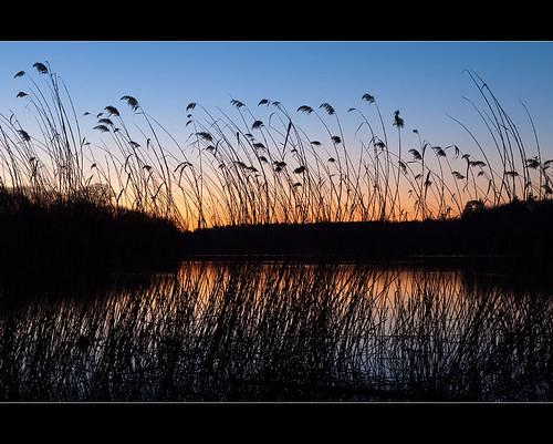 uk greatbritain travel sunset england orange lake reflection nature water silhouette canon dark landscape outdoors glow dusk grasses etchings virginiawaterlake royallandscape robotography lastshotoftheday 5dmkii robovercashphotography