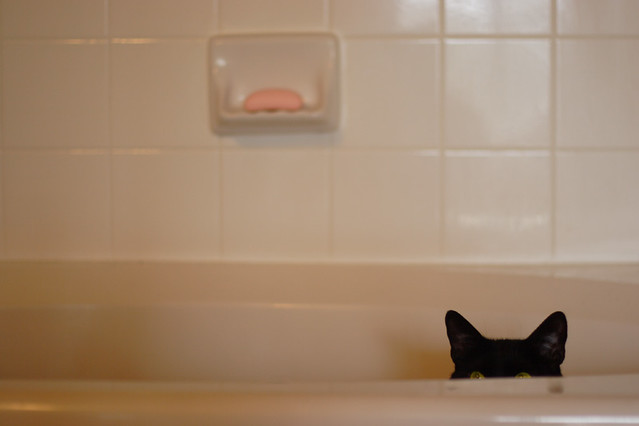 Cat Sometimes Drips Urine After Using The Litter Box