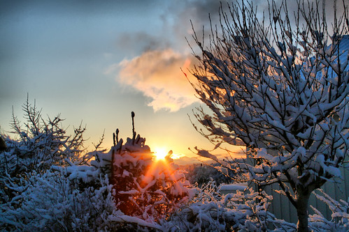 trees winter snow sunrise larigan phamilton gettyimagesnorwayq1
