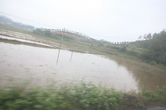wetland, floodplain, marsh,
