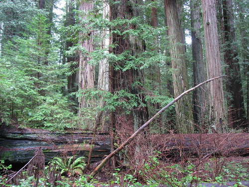 Redwoods and Invaders