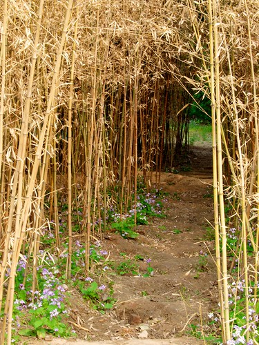 Path in the bamboo