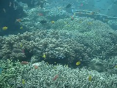 shoal(0.0), coral reef(1.0), coral(1.0), fish(1.0), coral reef fish(1.0), marine biology(1.0), stony coral(1.0), natural environment(1.0), underwater(1.0), reef(1.0),