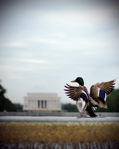 world wings pond memorial war dof view national ii lincoln mallard photocontesttnc10