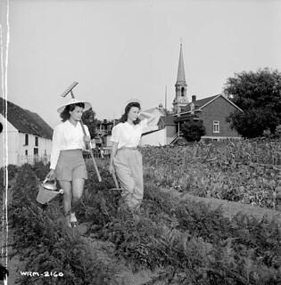 The Perry sisters help maintain the vegetable garden on the property of the Dominion Arsenals Ltd. plant, August 24, 1942 / Les sœurs Perry aident à l'entretien du potager sur la propriété de l'usine de la Dominion Arsenals Ltd., 24 août 1942