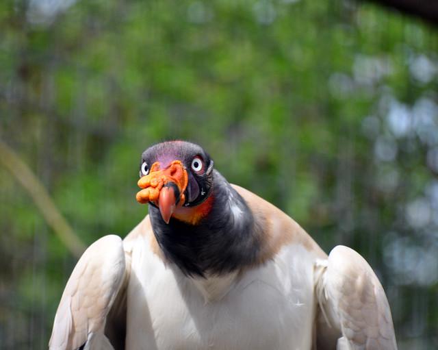 Ugly Bird   Flickr - Photo Sharing!