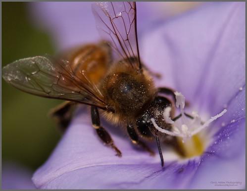 Bee Australia