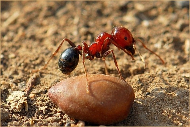 Ant, unknown