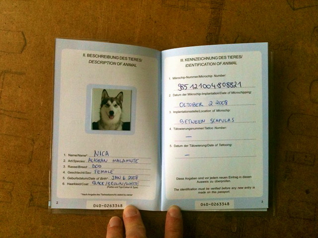 Passport For Dog Uk