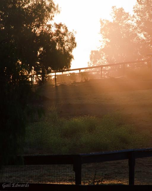 Morning rays of light