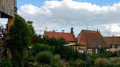 Vom Wandern zurückkommen. Auf Veranda setzen. Aperitif einwerfen. Störche glotzen. #VisitAlsace #Mietesheim
