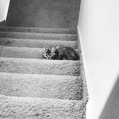 Maisie on the Stairs ~ Black and White