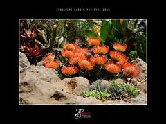 Singapore Garden Festival 2010