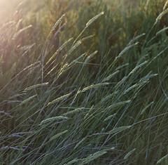 L1002307 Grassy by Lillput