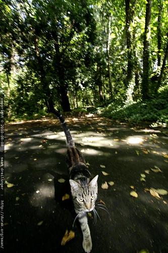 a kitten very far from home