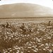 A Field of Flowers and Mount Tabor by OSU Special Collections & Archives : Commons