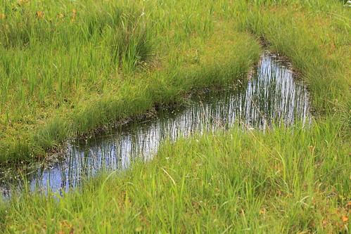 谷地平湿原
