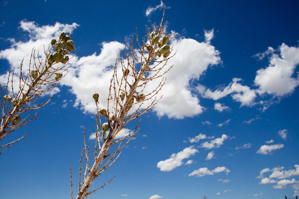 Carlsbad New Mexico - - Carlsbad, New Mexico