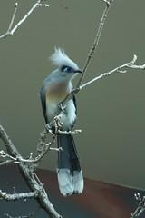animal, branch, wing, fauna, blue, twig, bird,