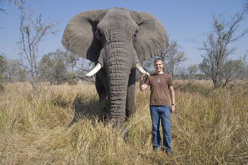 A man with a friendly elephant in the Okavango Delta, Botswana.