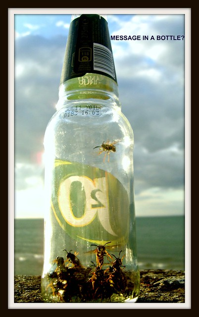 2. Urban Wasps - A drink and a song