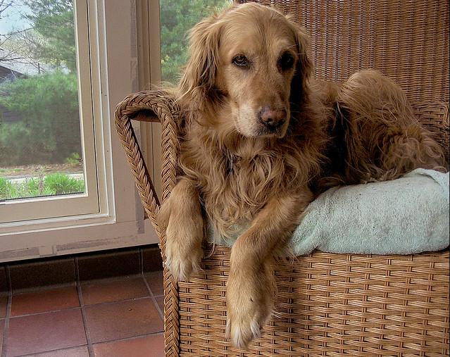 Bonnie (2005)