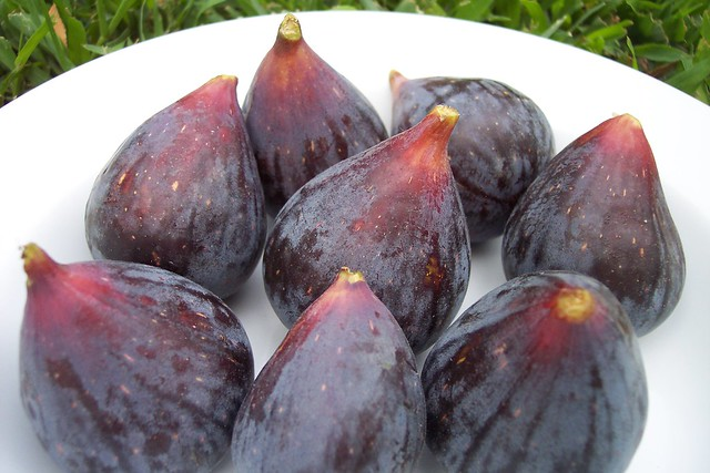 Black Mission Figs (hand-picked) | Flickr - Photo Sharing!