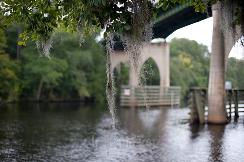 bridge trees sc water river moss dof conway southcarolina spanish hanging nikonafsnikkor50mmf14g