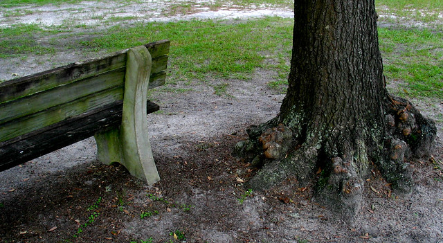 Flickr photo sharing for Tree trunk garden bench