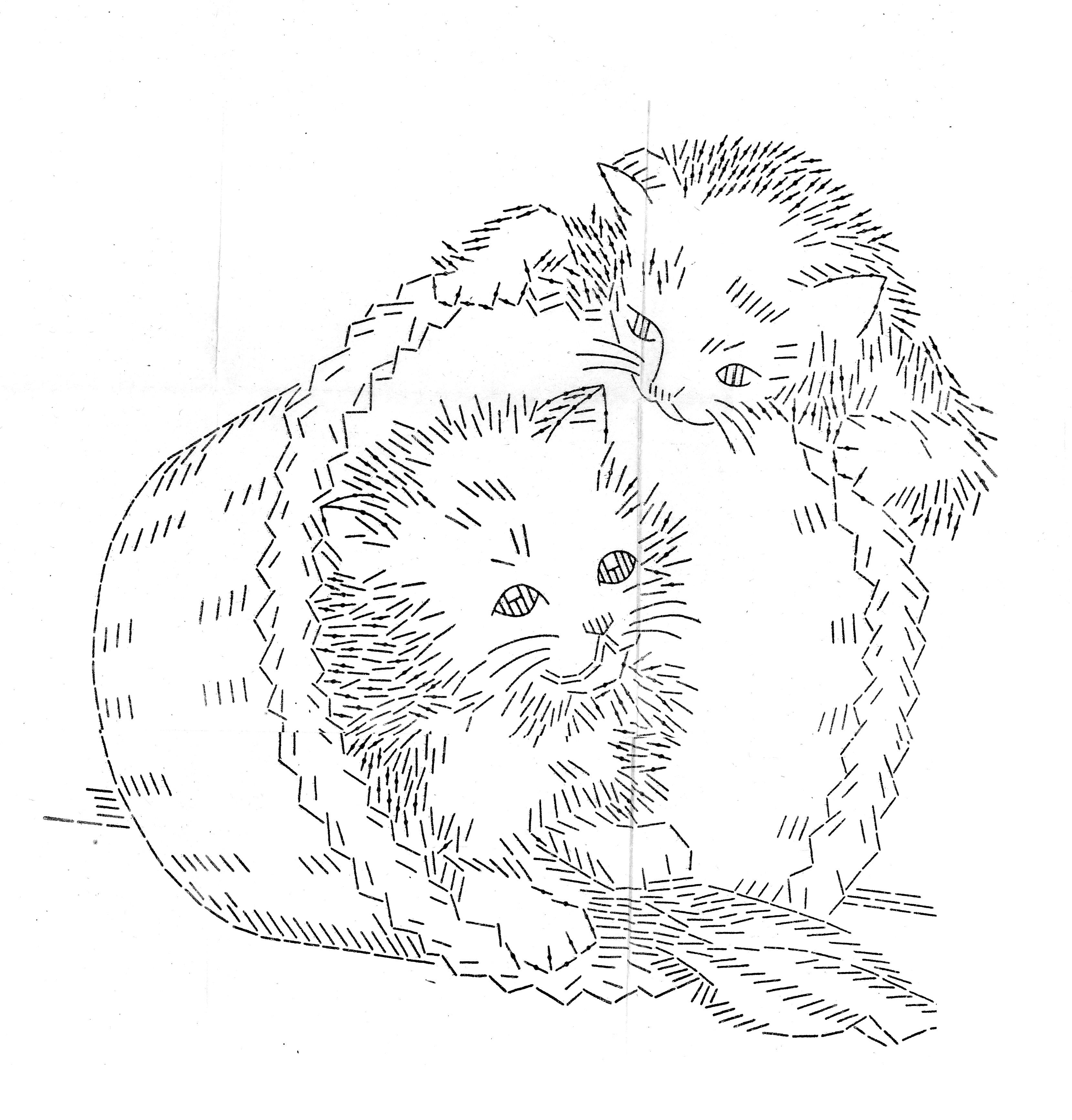 LW 1487 kittens