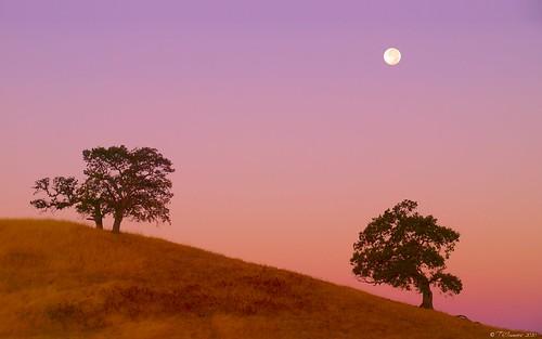 california lighting trees sky moon sunrise landscape twilight haze oak landmark olympus luna explore e3 moonset sacramentocounty 1000views californialandscape zd 1260mm olympuse3
