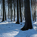 Hoch-Sauerland-Winter-NRW-144.jpg by MichaelSanderDU