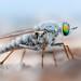 Stiletto fly on the beach by johnhallmen
