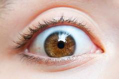 brown, eyelash, eyelash extensions, close-up, eyebrow, eye, organ,