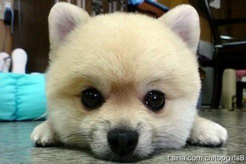 cute dog height=326